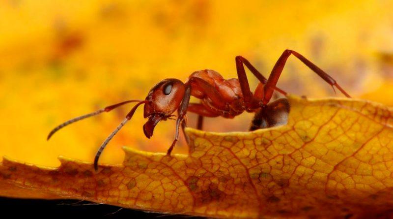 El sorpresivo caso de las hormigas caníbales encontradas en un búnker nuclear