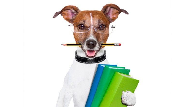 ¿Los perros son inteligentes? Expertos explican de qué manera