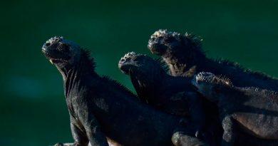 Galápagos, a salvo del virus pero con el turismo y la ciencia en pausa