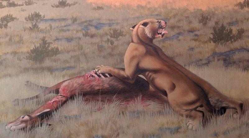 Un gato gigante que cazaba bisontes vivió en América del Norte