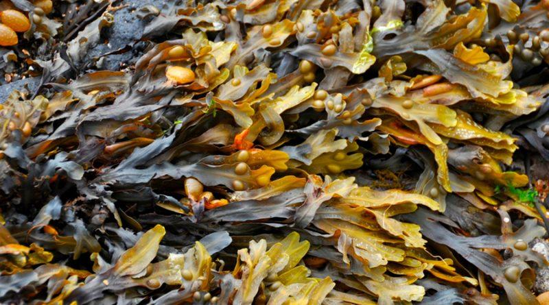 Crean ropa con algas capaz de realizar fotosíntesis