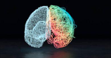 Descubren la puerta de entrada a la consciencia en el cerebro