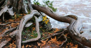 Los árboles desarrollan redes a través de las cuales intercambian recursos vitales