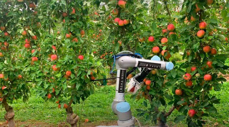 Este robot agricultor puede recolectar manzanas a una velocidad que ni imaginas