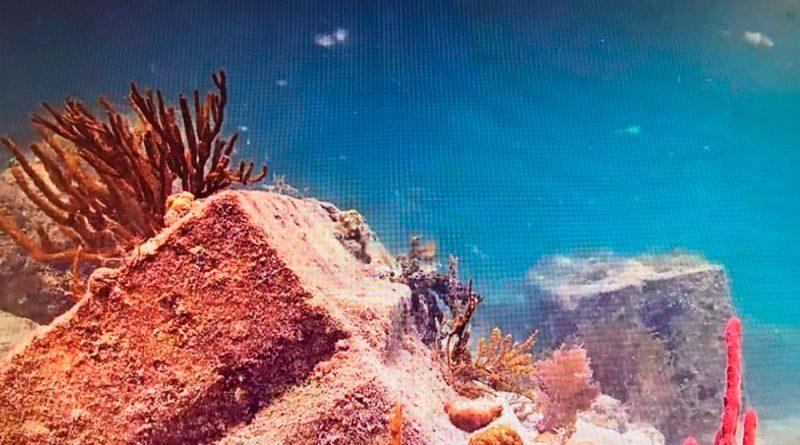 Descubren células inmunes en genética de corales que forman arrecifes