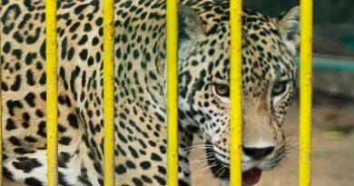 Se hallan en riesgo 280 especies de mamíferos mexicanos