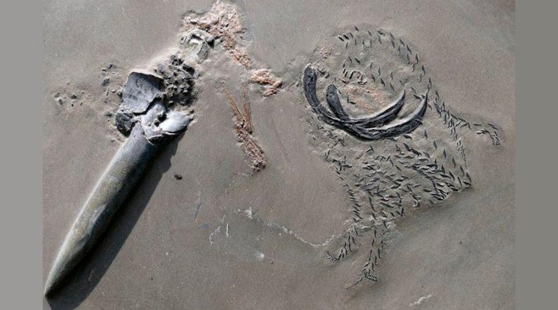 Un calamar jurásico matado mientras comía dejó un fósil único