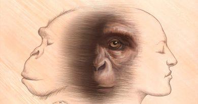 Chimpancés y humanos comparten un ancestro común que vivió a finales del Mioceno