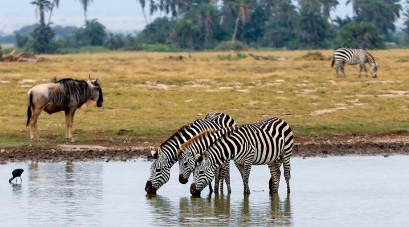 Kenia lanza un plan para crear su primer censo nacional de animales salvajes