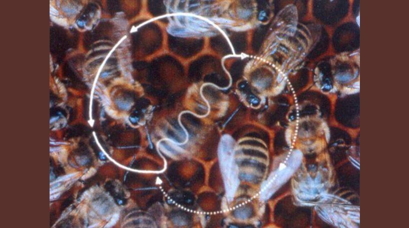Einstein anticipó la conexión física de la orientación en aves y abejas