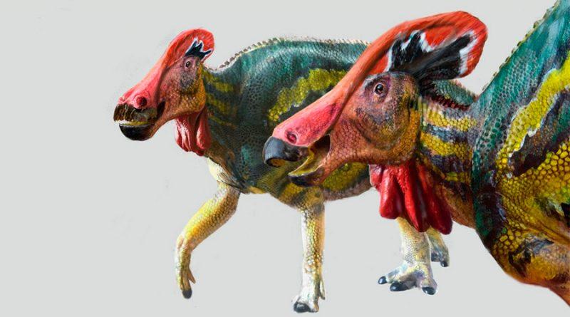 Paleontólogos mexicanos identifican nueva especie de dinosaurio