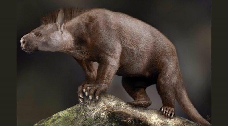 Mamíferos sucedieron a los dinosaurios con pies robustos