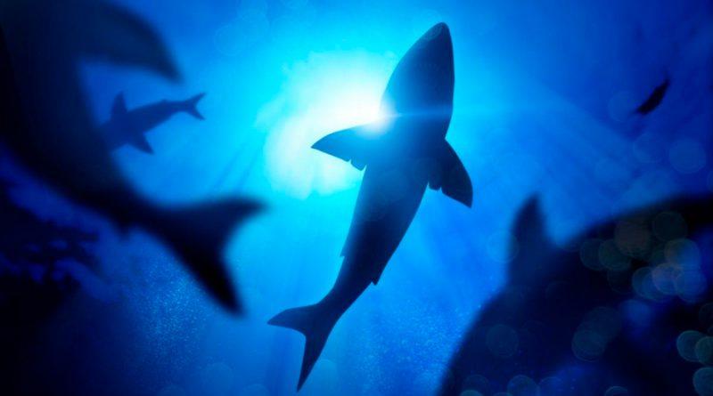 Los tiburones utilizan el campo magnético de la Tierra como GPS