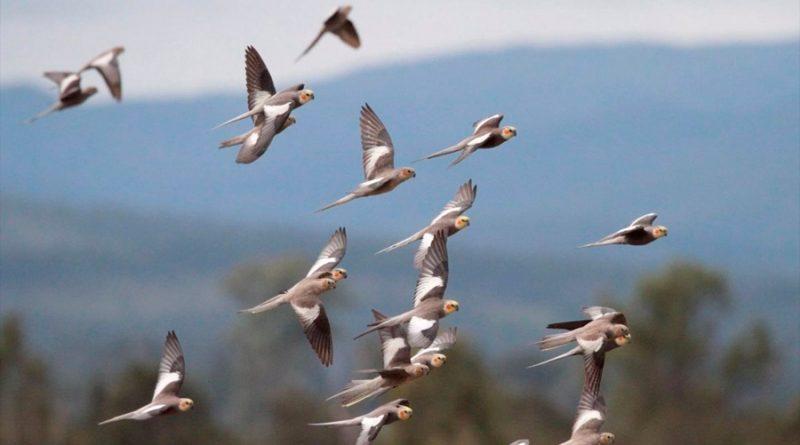 Hay más de 50 mil millones de aves en el mundo