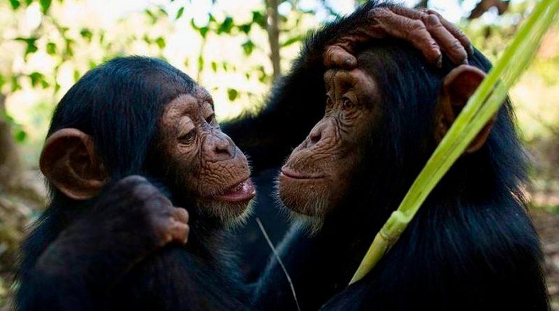 ¿Existe la cultura en los animales?
