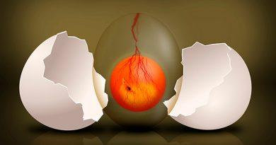Embriones de muchas especies escuchan para saber del mundo