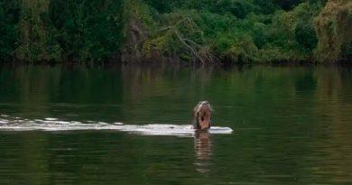 Encuentran en Argentina una nutria de río gigante que se creía extinta