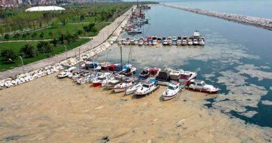 Turquía se inunda de 'mocos de mar' por el calentamiento global