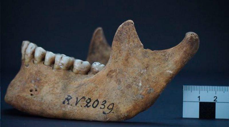 Identifican a cazador-recolector de hace 5 000 años como primera víctima de peste