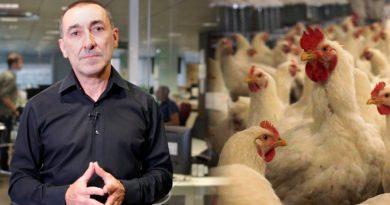 ¿Qué peligro tiene el virus de gripe aviar H10N3 descubierto en China?