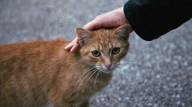 ¿Es bueno o malo acariciar a los gatos? La ciencia responde