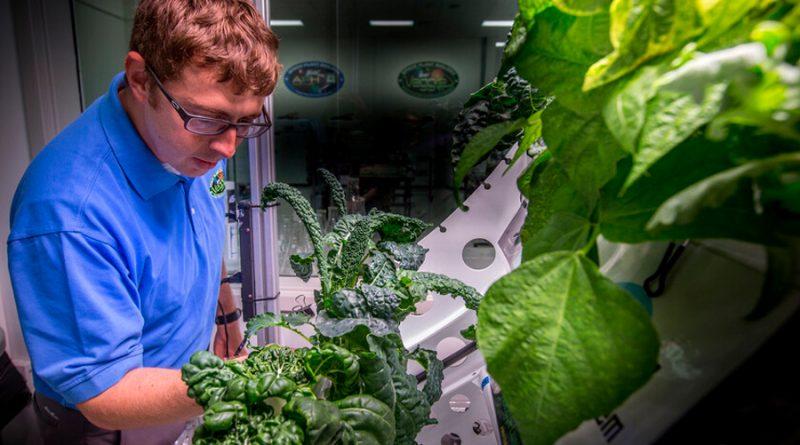Una verdura china florece en el espacio: la Estación Espacial Internacional