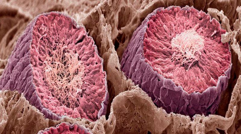 """Los testículos y el cerebro """"comparten el mayor número de genes del cuerpo"""", afirma estudio"""