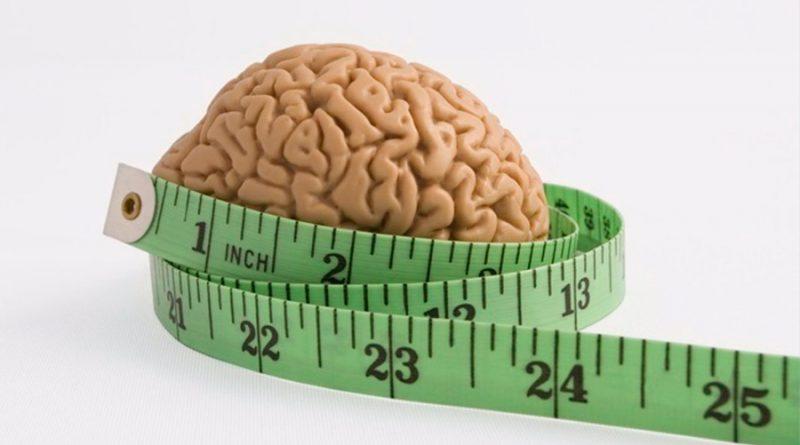 Hallan el circuito cerebral que indica cuándo dejar de comer