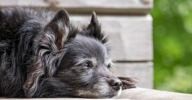 Así está ayudando la ciencia a lograr que los perros vivan más años