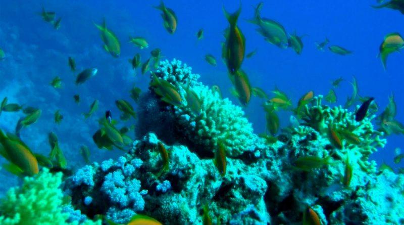Académica de la BUAP dirigirá el estudio genético de los arrecifes del Golfo de México