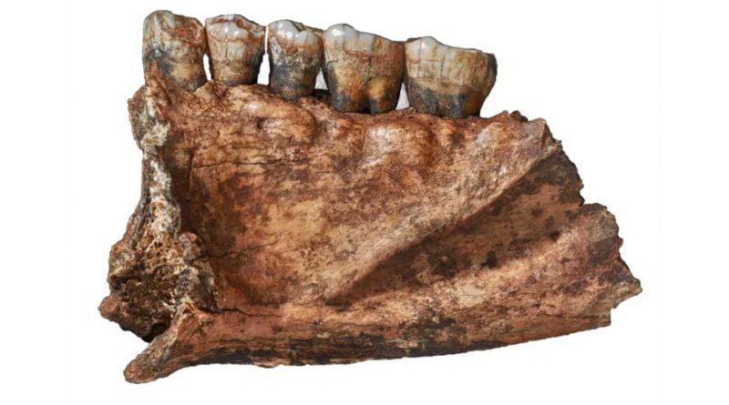 La sorprendente y variada dieta que permitió a los neandertales sobrevivir en Siberia