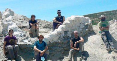 Hallan columna vertebral de más de cinco metros de enorme dinosaurio