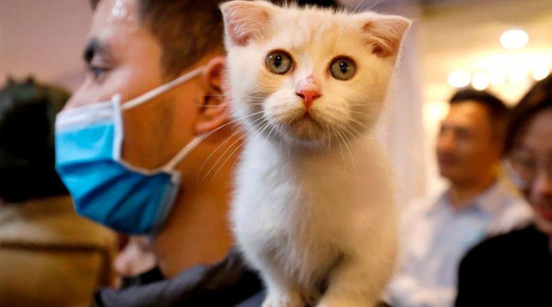 Hay cinco tipos de relaciones entre los gatos y sus dueños: ¿cómo saber cuál es la tuya?