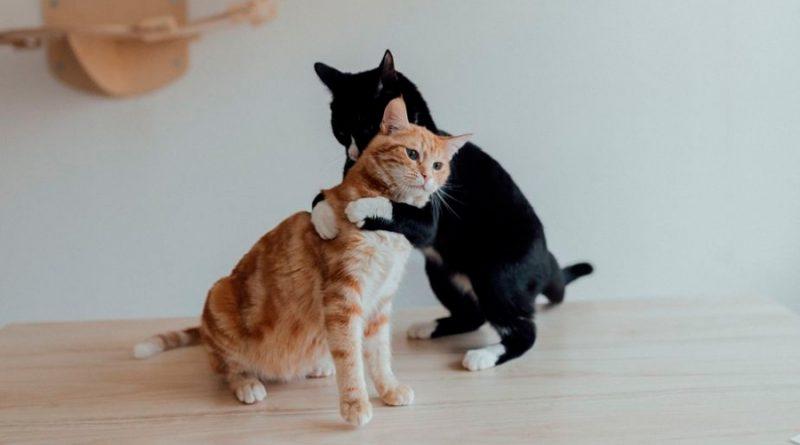 UNAM publica el manual para cuidados de los gatos que seguro querrás leer