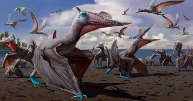 Descubren nueva especie de pterosaurio revelada por huellas fósiles en China