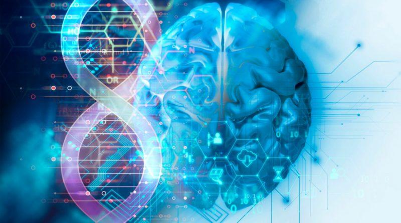 Descubren el sorprendente papel de un gen fundamental en la formación temprana del cerebro