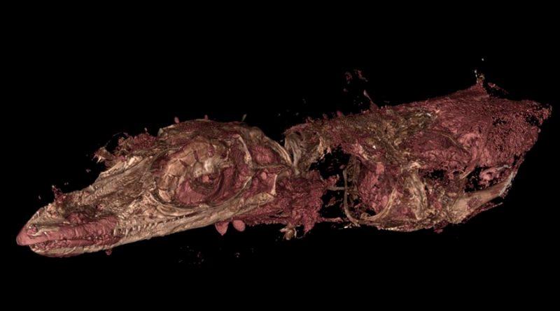 Nueva extraña especie fósil de lagarto se había tomado por pájaro