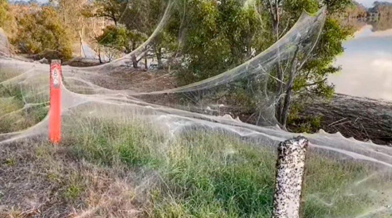 Enormes telarañas cubrieron un territorio en Australia tras una tempestad