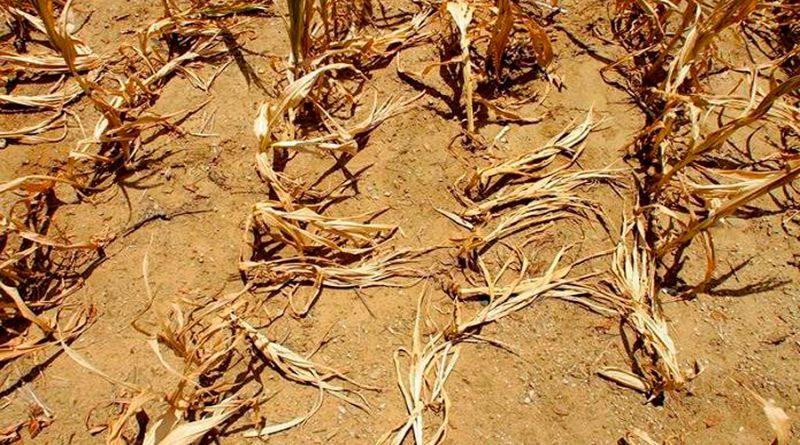 La sequía en México se debe al fenómeno de la celda de Hadley