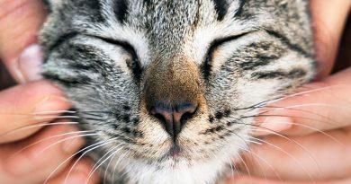 Los gatos parpadean para comunicar su amistad