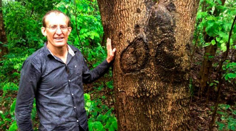 """Moringa: estudio de la UNAM revela los beneficios del llamado """"árbol milagro"""""""