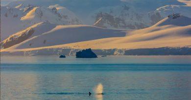 Las ballenas no expulsan agua por los espiráculos y otros mitos desmentidos