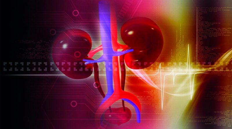 Sientan las bases para convertir hígados de donantes ahora inutilizables en trasplantables