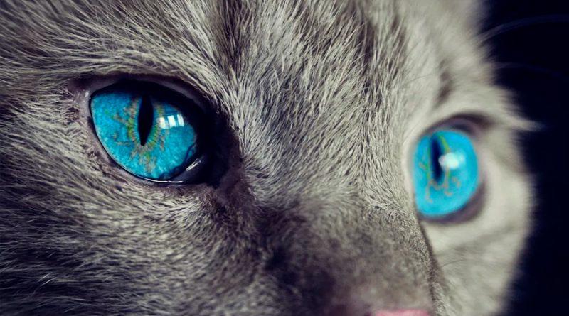 ¿Por qué brillan los ojos de los gatos en la oscuridad?