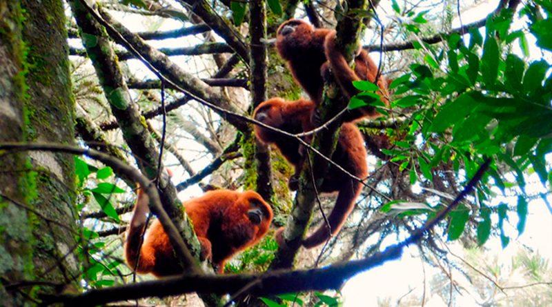 Una quincena de instituciones de Europa y América, unidas para determinar las rutas de alimentación de los primates