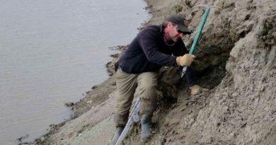 """Descubren una zona que fue una """"guardería"""" de bebés dinosaurios en el Ártico"""