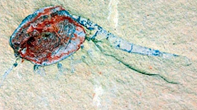 Un vivero de fósiles ilustra la vida hace 518 millones de años