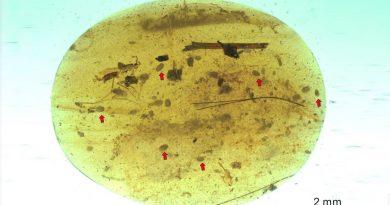 Descubren los fósiles de espermatozoides más antiguos del mundo