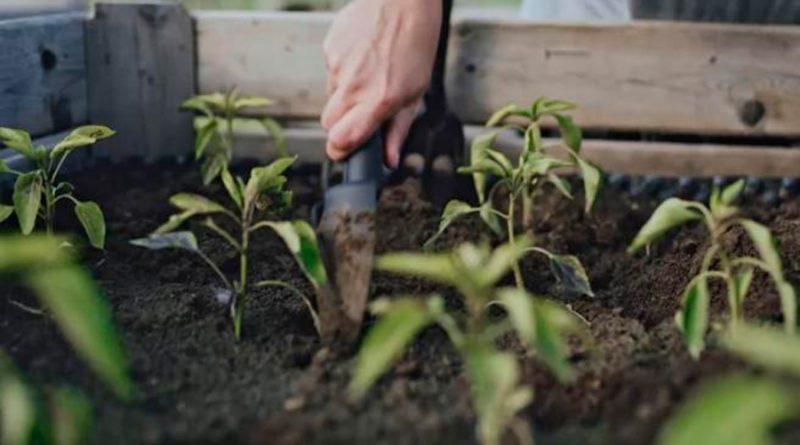Científicos descubren el 'cantil': una parte de las plantas que se desconocía hasta ahora