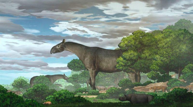 Encuentran los restos de un antiguo rinoceronte gigante: era más alto que una jirafa